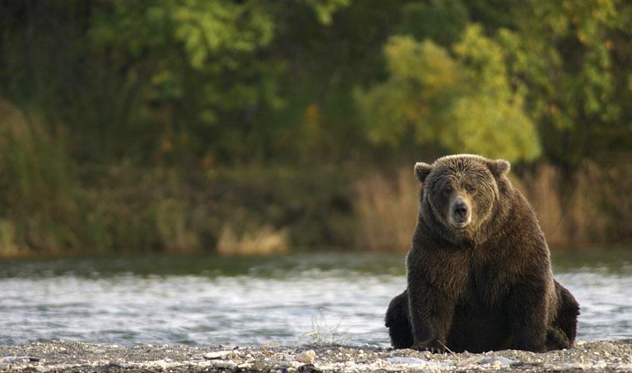 Zahlreiche Wildtiere im Yukon und in Alaska
