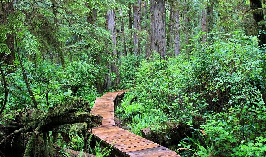 Pacific Rim Nationalpark, Regenwald auf Vancouver Island