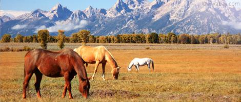 Ranch Urlaub Kanada